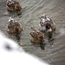 温泉へ行こう!東北で人気のおすすめ温泉マイベスト5★秘湯を守る会はいかが