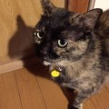 猫の迷子札◆軽くて小さいプラバンがおすすめ手作り名札の作り方