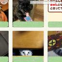 ペットフードの「ペットライン」会員サイトにプラ板迷子札が紹介されました♪